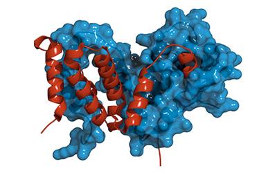(TRADURRE) Pubblicati i risultati dello studio HAVEN 3 sulla profilassi con emicizumab in emofilici gravi adolescenti-adulti senza inibitore